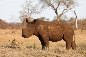 SABI SABI Wildlife