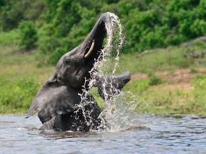 Zambezi-Queen-Chobe-Natural-Park