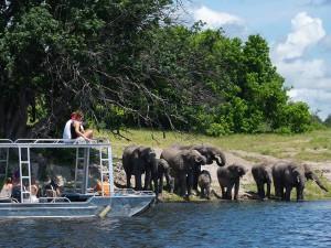 Zambezi-Queen-River-Viewing