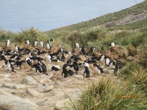 Vögel auf den Falkland Inseln