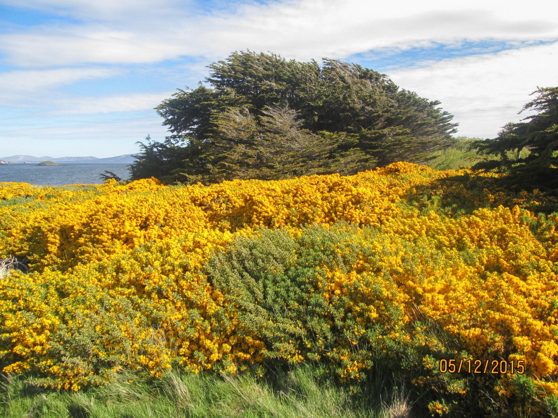 Blumen auf den Falkland Inseln