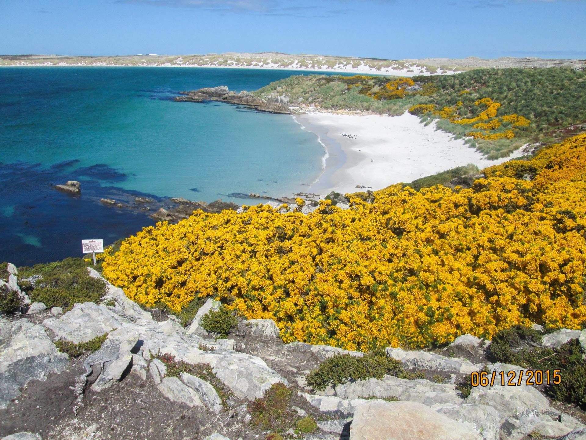 Blumen, Strand und Meer auf den Falkland Inseln