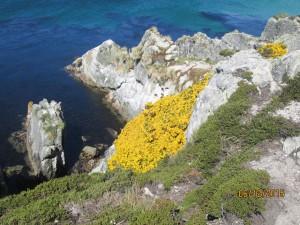 Blumenhänge auf den Falkland Inseln