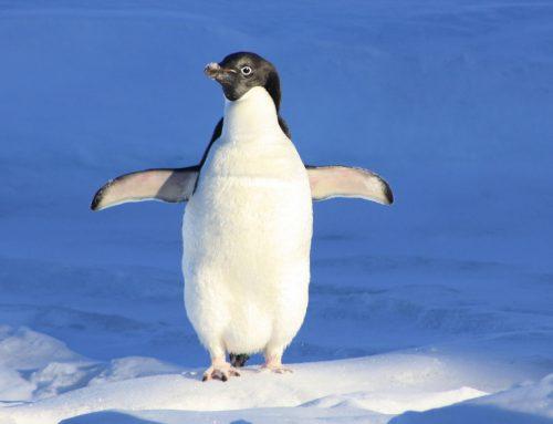 Ein Antarktisches Abenteuer