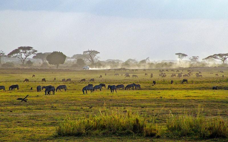 Afrika Savanne