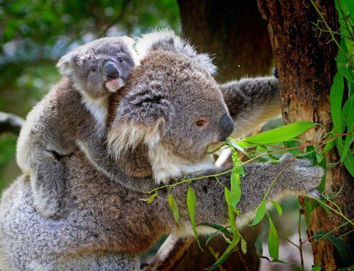 Reise durch Australien: Das müssen Sie gesehen haben!