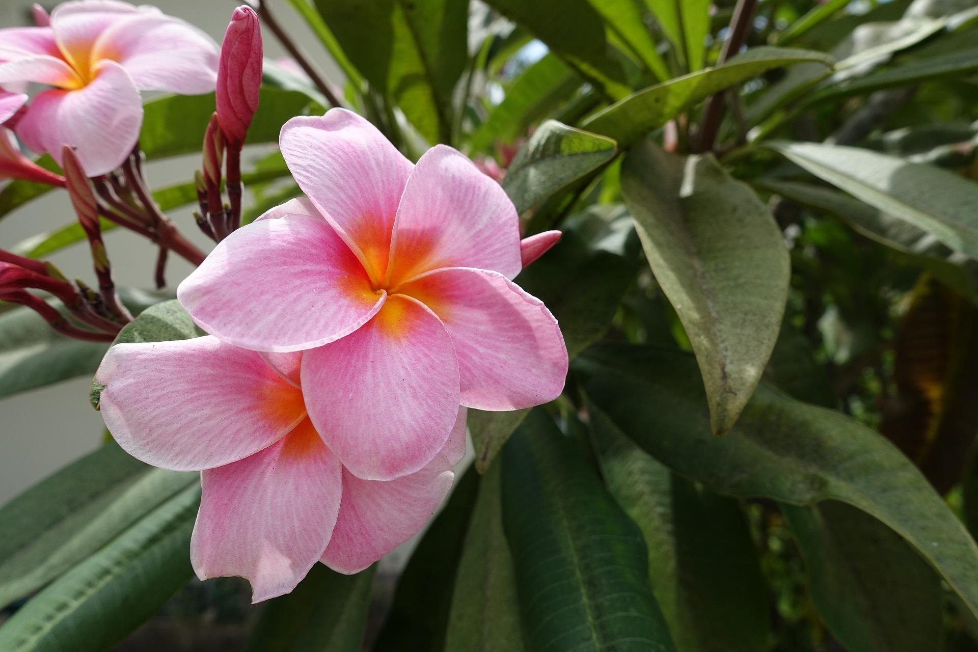 Madeiras wundervolle Blüten