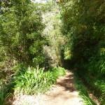 Wandern auf Madeira: Hinein ins Dickicht. Viele Wanderwege führen durch Gärten, Büsche und kleine Wälder bis hinauf auf die Bergspitzen.