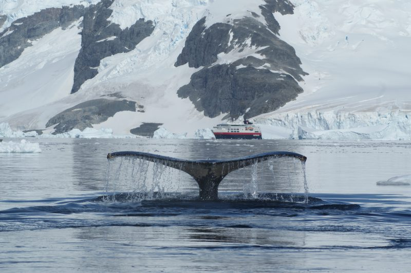 © Ilse Moldaschel: Whalewatching