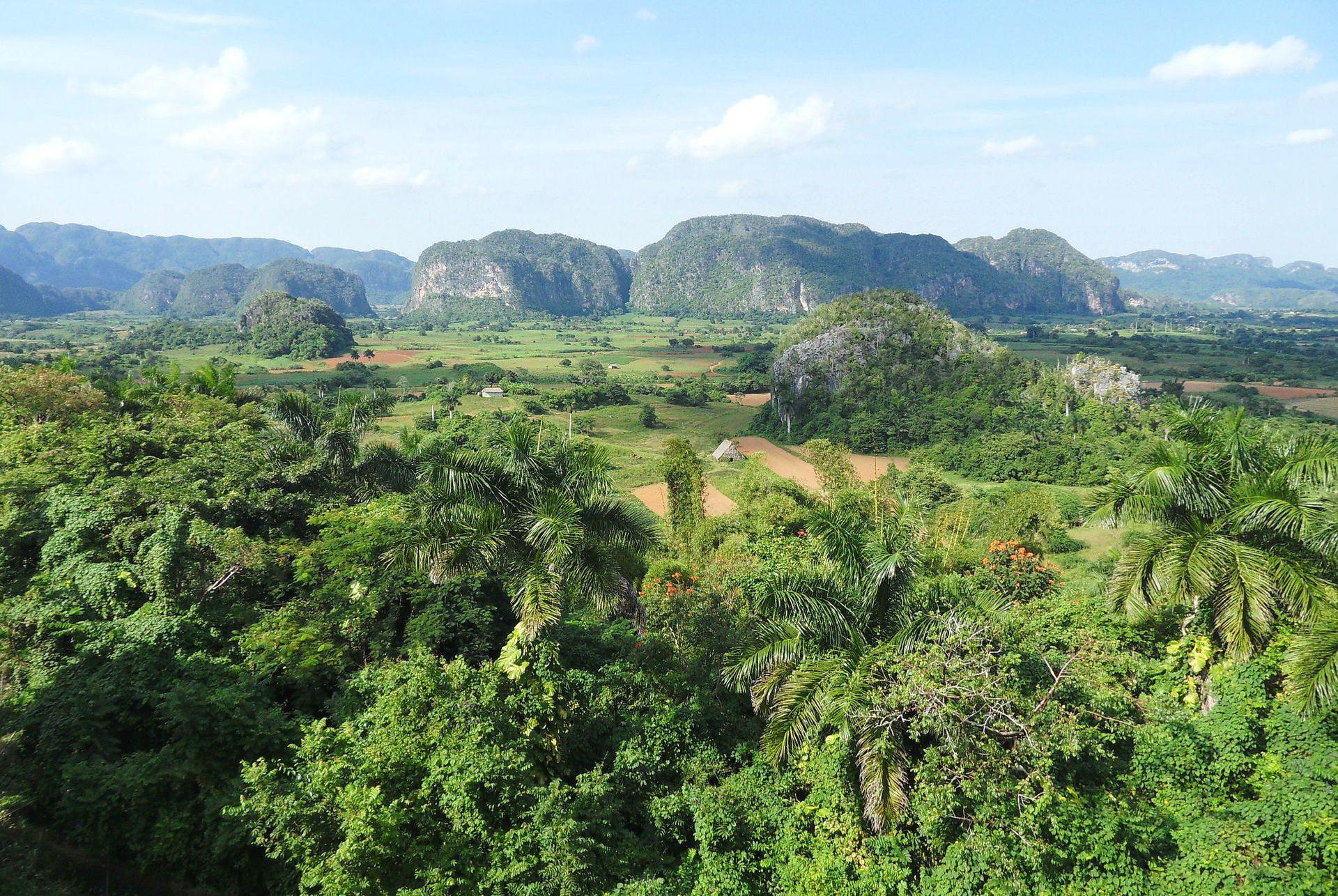 Die verwilderte Landschaft auf Kuba