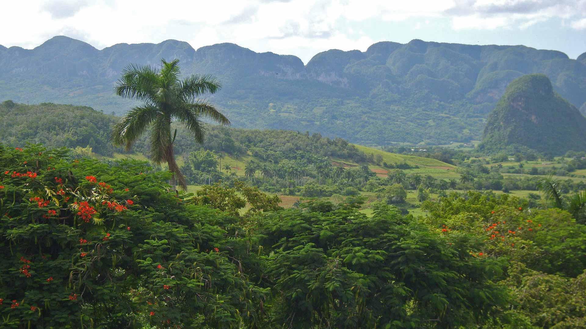 Kuba, Regenwald, Urwald, Landschaft