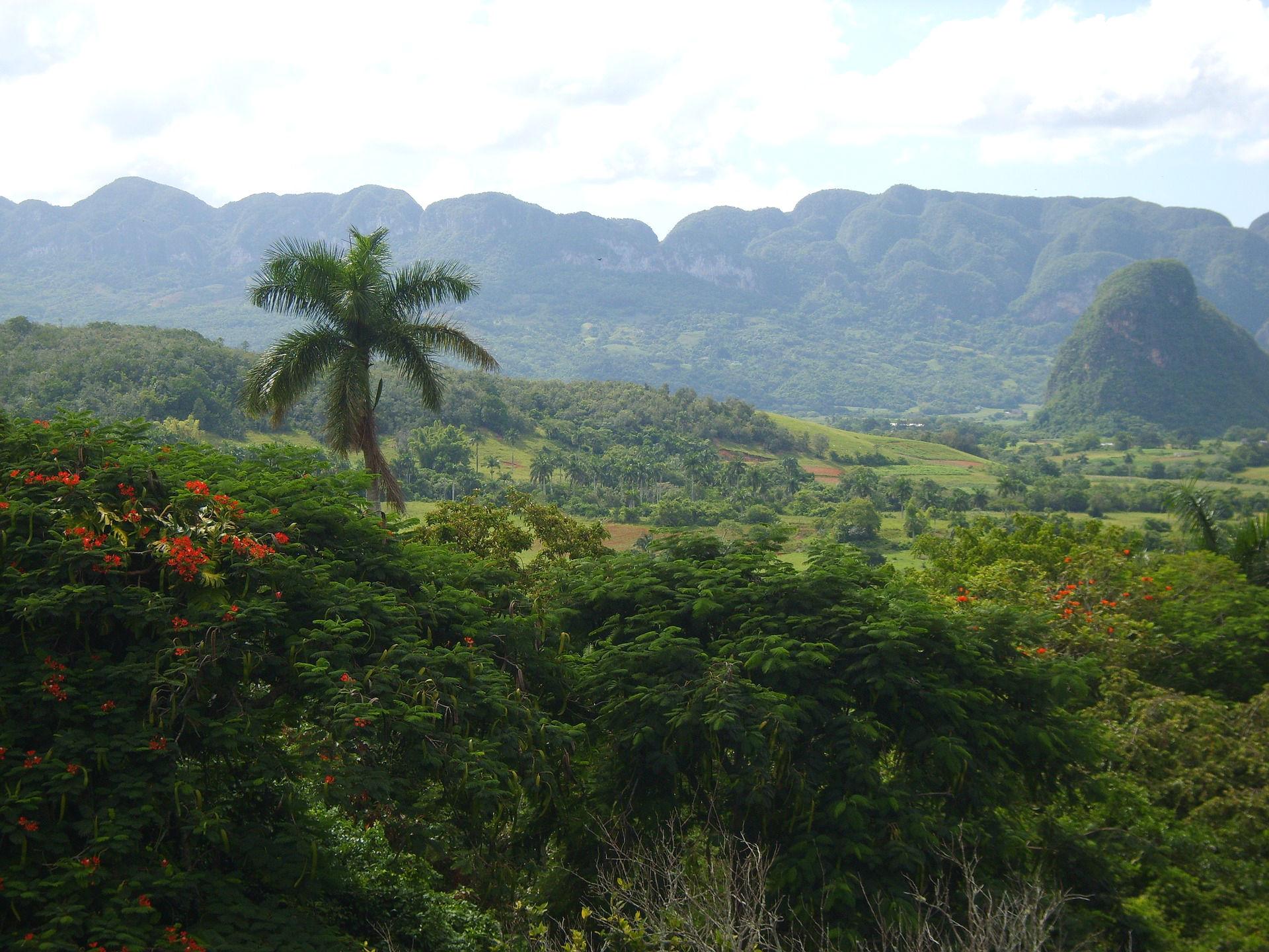 Kubanischer Regenwald