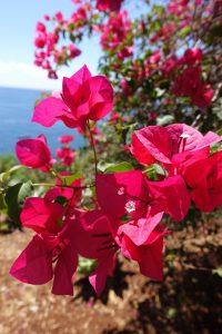 Blütenpracht auf Madeira