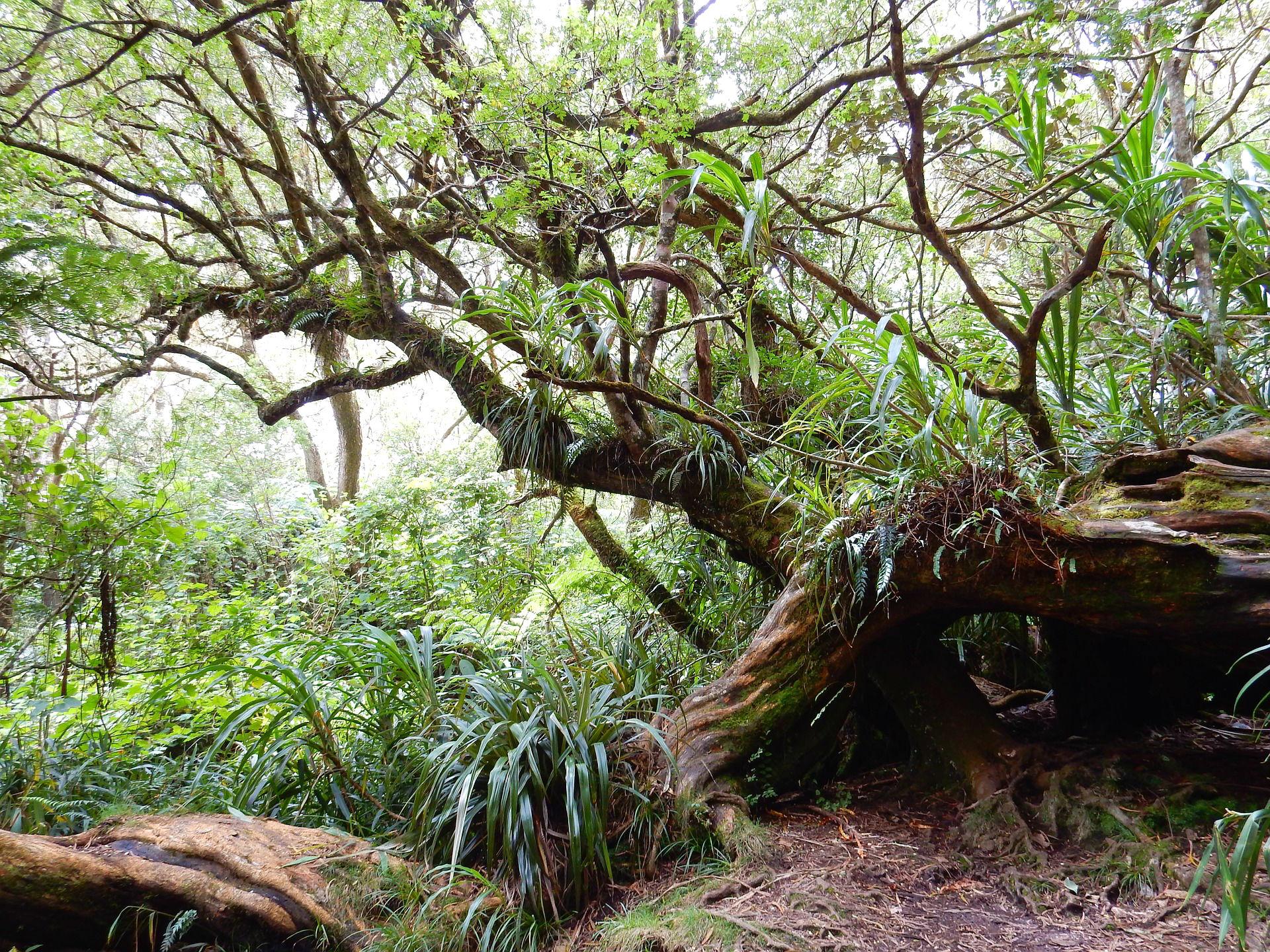 Entdecke die einzigartige Natur La Réunions während einer Wanderreise
