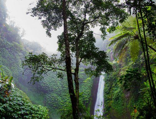 Insel-Wanderreisen: Die besten Wanderwege auf Guadeloupe