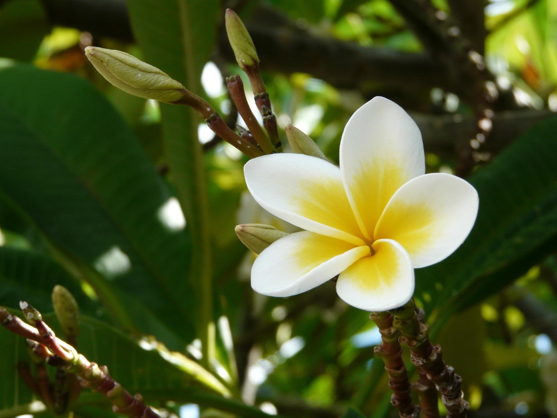 Blumenvielfalt in den Nationalparks auf Mauritius