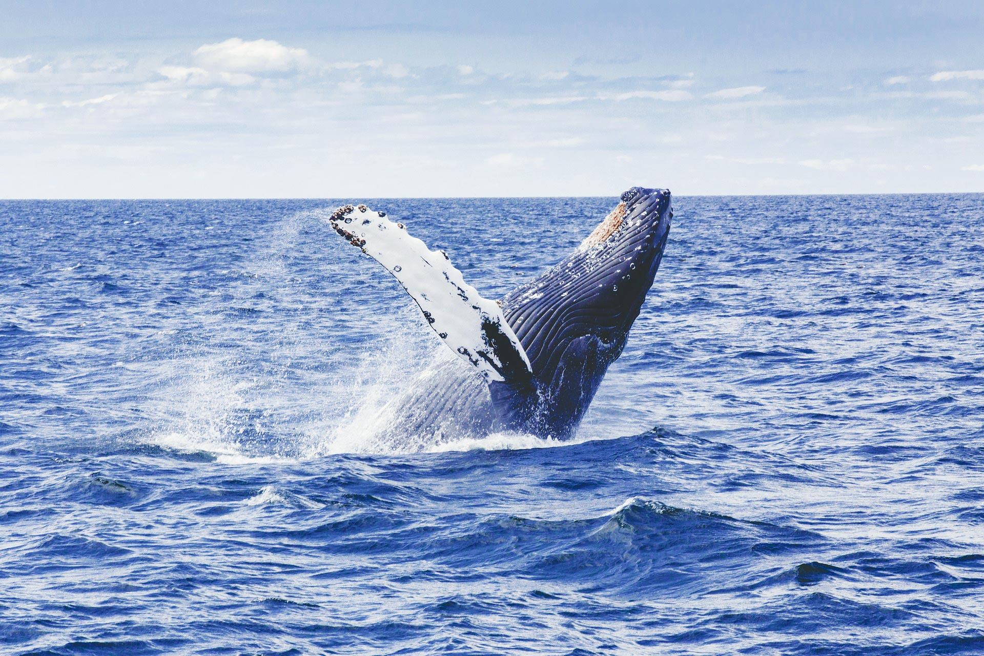Walbeobachtung im Atlantik