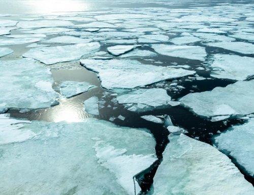 Reisebericht Kreuzfahrt in die Antarktis, Teil 11