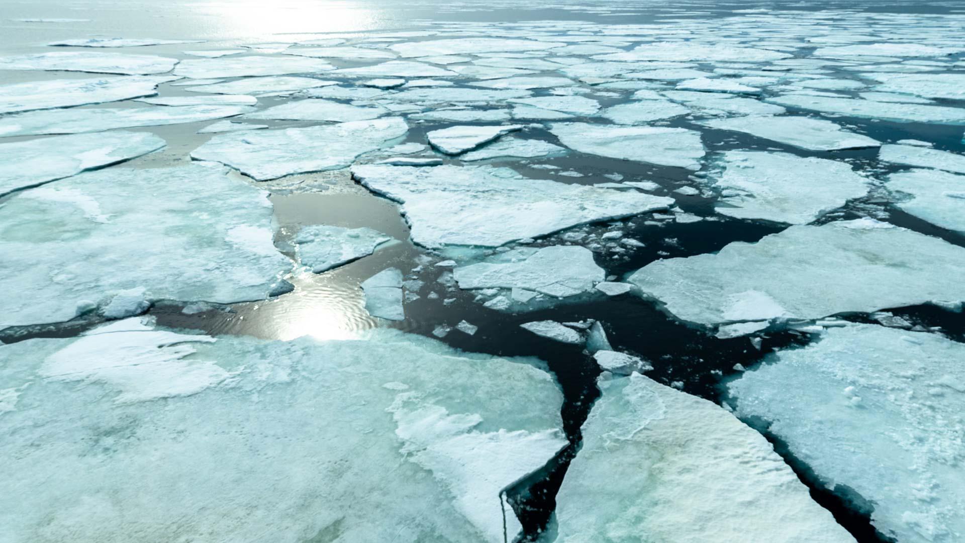 Weddell Sea. Carpe diem
