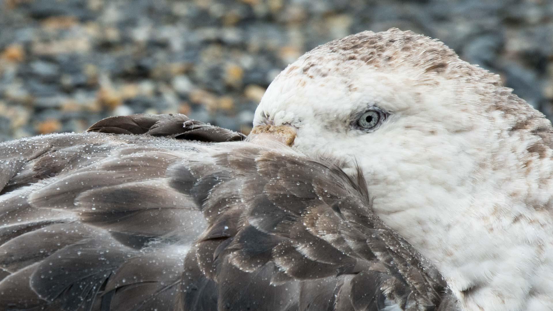 Albatross, Tierwelt Moltke Harbor, Südgeorgien