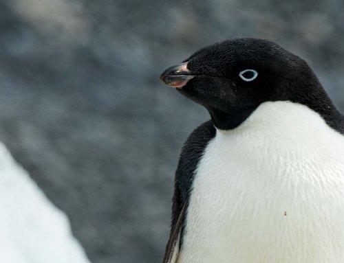 10 Fragen und 11 Antworten für Deine Reiseplanung in die Antarktis