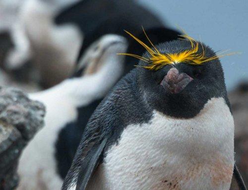 Reisebericht Kreuzfahrt in die Antarktis, Teil 9
