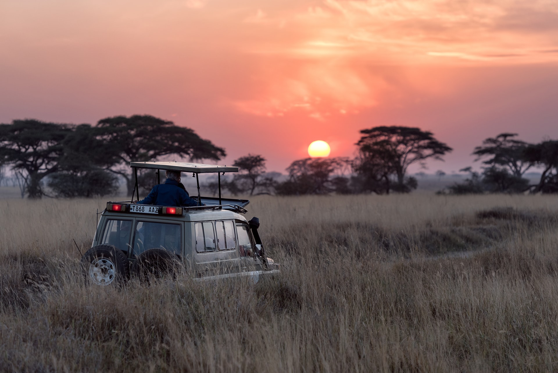 Auf Safari im Busch Afrikas