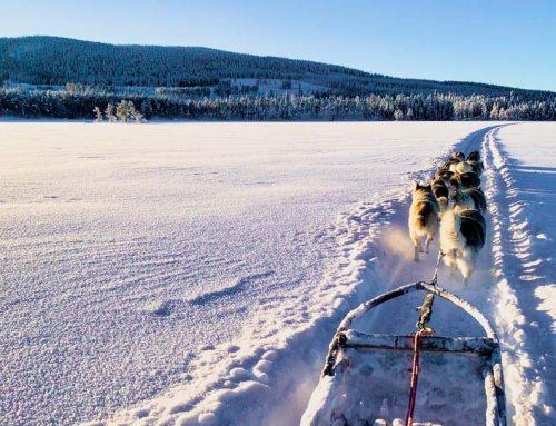Huskies am Nordpolarkreis