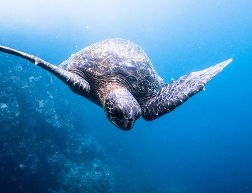 Die Galápagos Inseln – Einzigartige Tierwelt – Zoo ohne Gehege – Faszinierende Landschaften